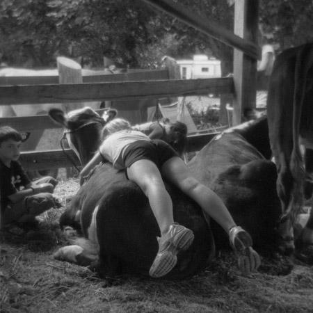 Cow Flop by Meg Birnbaum