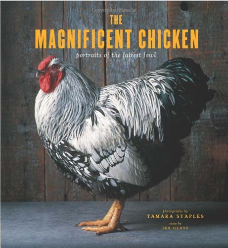 The Magnificent Chicken: portraits of the fairest fowl by Tamara Staples
