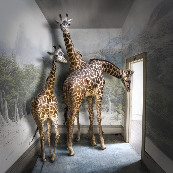 Serengeti Room by Carol Erb