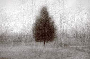 Higher Ground Cedar by Kent Krugh