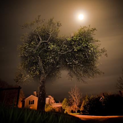 Full Flower Moon by Bob Avakian
