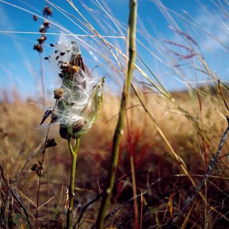 Angelee Wilkerson-Milkweed