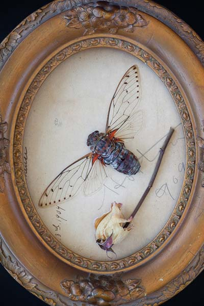 Natura Morta by Daniel Mosher Long