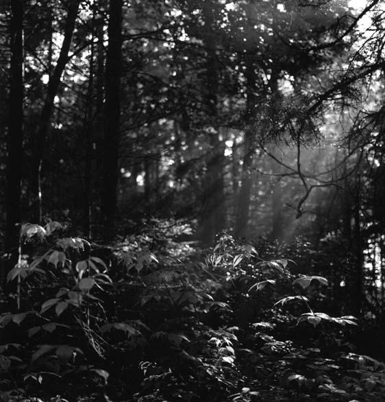 #3 from First Light Last Light by Debi Milligan