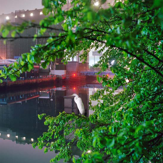Gowanus_Wild_Egret by Miska Draskoczy