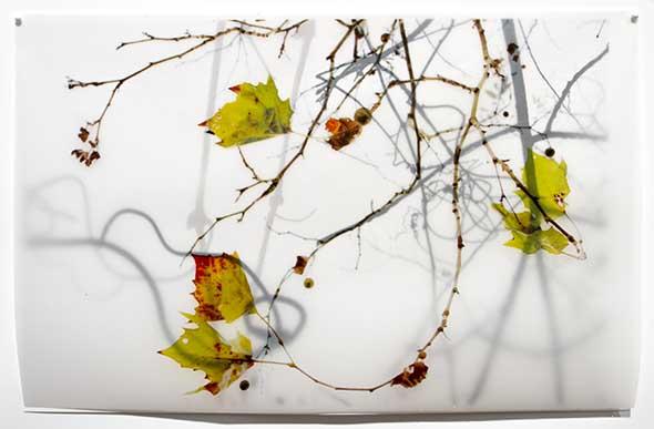 Green Leaves by Karen Bell