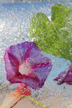 Morning Glory with Bubble, by Mary Kocol
