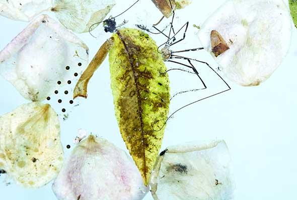 Spider by Karen Bell, from Flotsam & Jetsam