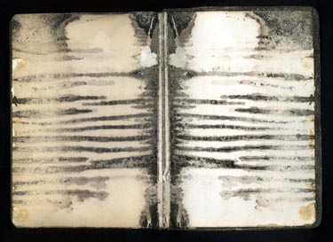 Zebra Bibile by Terri Garland
