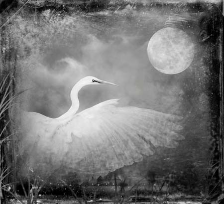 Snowy Egret by Dianne Yudelson