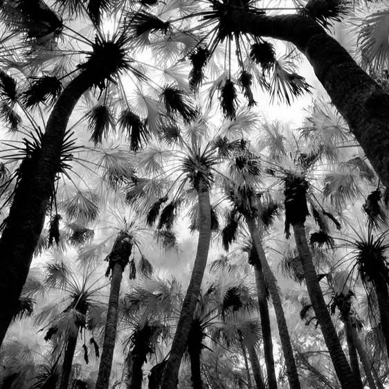 from Primitive Florida by Benjamin Dimmitt