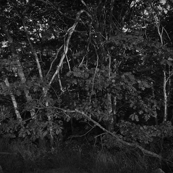 #1 from First Light Last Light by Debi Milligan