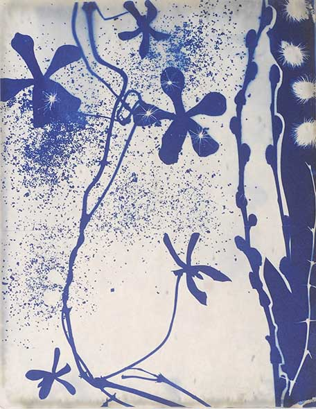 Night Shower by Dana Matthews from Cyanotypes: an homage to Anna Atkins