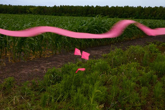 "Photographer Lisa Kessler Receives Mass Cultural Council Fellowship Award for ""Seeing Pink"" series"