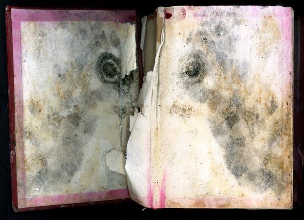Bulls Eye Bible by Terri Garland