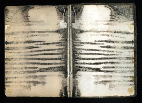 Zebra Bible by Terri Garland