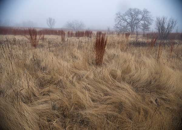 DavisOrtonGallery - angilee_wilkerson - winter grass