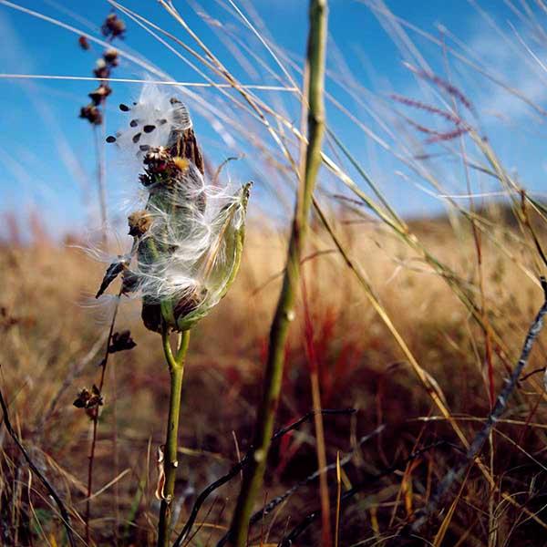 DavisOrtonGallery - angilee wilkerson, milkweed