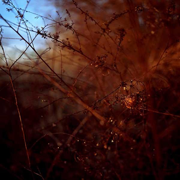 DavisOrtonGallery - angilee_wilkerson, Residue