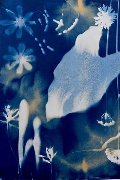 Dana Matthews - caladium wysteria pods, cyanotype