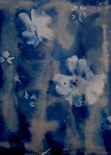 DavisOrtonGallery - Dana Matthews -earl yspring, cyanotype