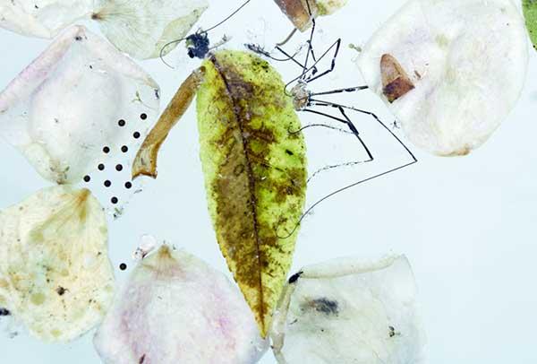 Davis Orton Gallery - Karen Bell. Spider