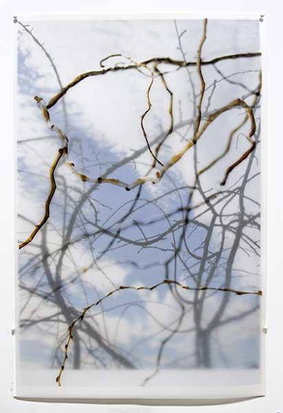 DavisOrtonGallery - Karen Bell, Blue and White
