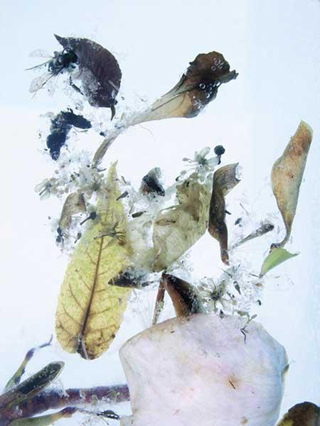 DavisOrtonGallery - Karen Bell - Dark Petals