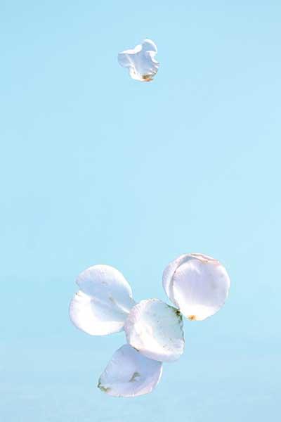 DavisOrtonGallery - Karen Bell - Only Roses