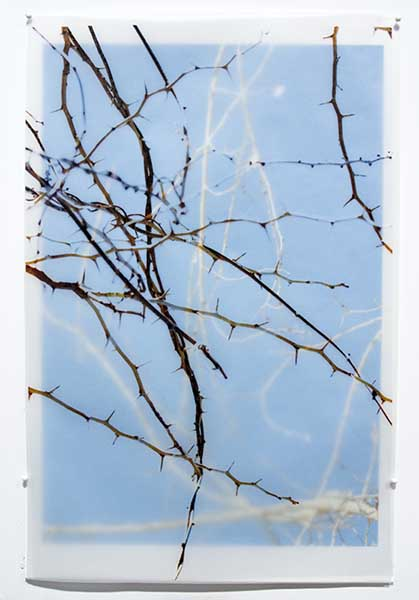 DavisOrtonGallery - Karen Bell - Thorns
