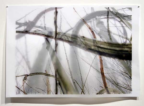 Davis Orton Gallery - Karen Bell - Winter Garden