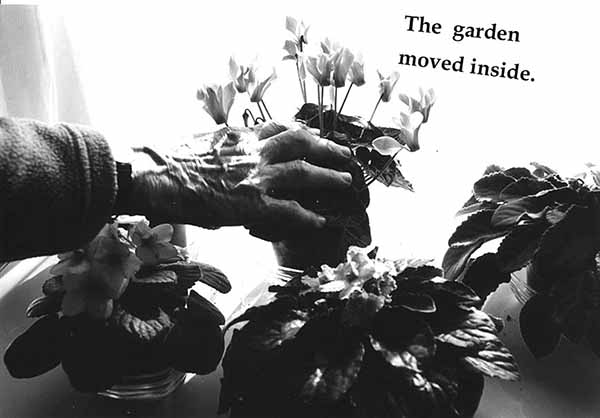 Miriam Goodman, The Garden moved inside.