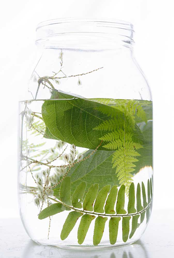 "Japanese Knotweed + Fern, by Emily Hamilton Laux Pigment Print, 17""x22"", ed 1/10, $350"