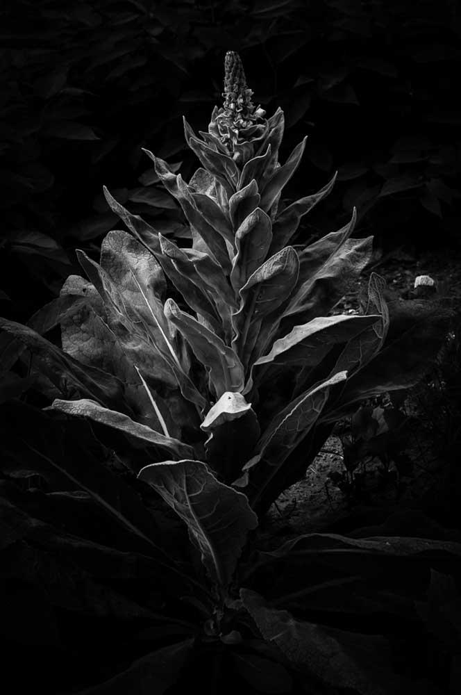 """20140730 183 Block Island RI by Michael Bogdanffy-Kriegh, Pigment Print, 13""""x19"""", ed1/7, $350"""