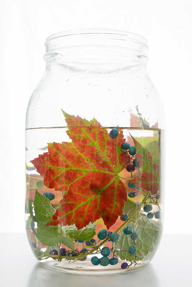 "Japanese Porcelainberry + Red Maple by Emily Hamilton Laux, Pigment Print, 17""x22"", ed 1/10, $350"