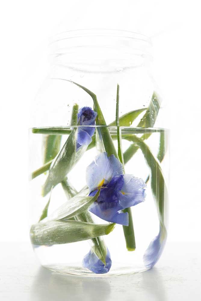 "Iris by Emily Hamilton Laux, Pigment Print, 17""x22"", ed 1/10, $350"