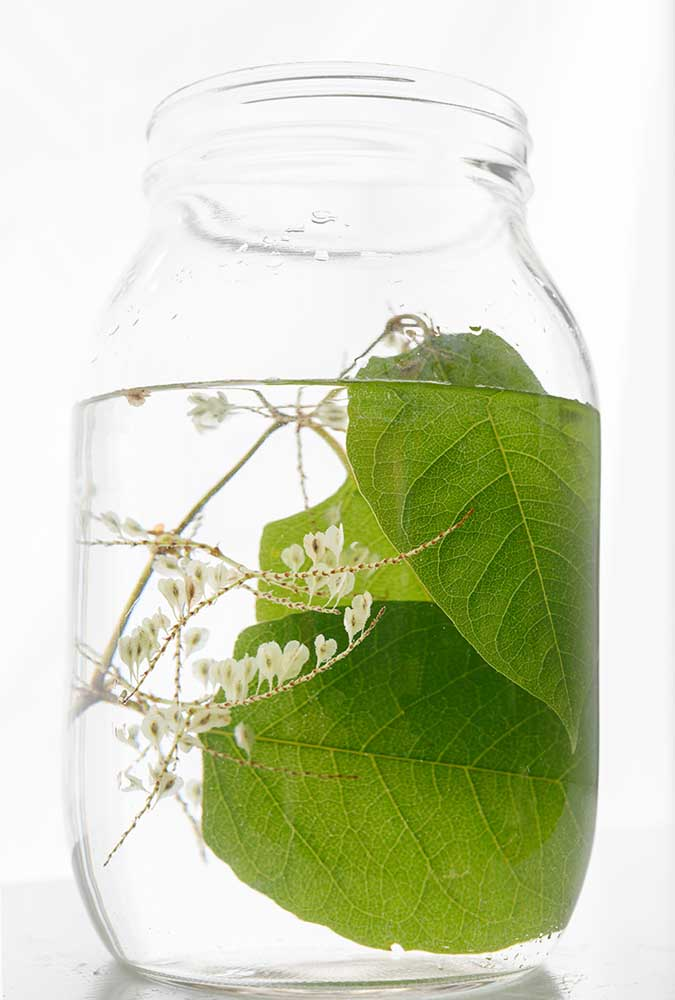 "Japanese Knotweed by Emily Hamilton Laux, Pigment Print, 17""x22"", ed 1/10, $350"