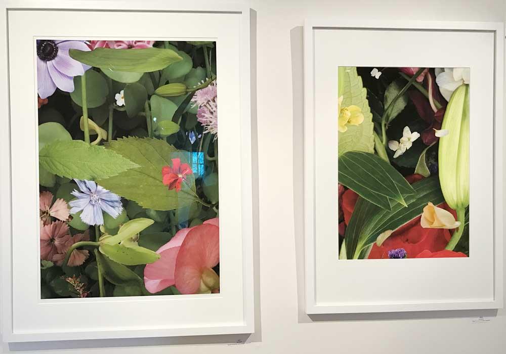 Carol March, Bloom, Gallery shot