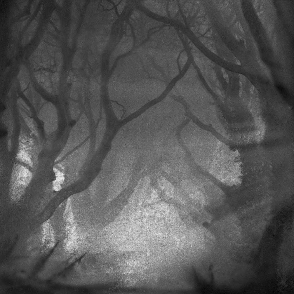 "Dawn Was Breaking, by Carla Shapiro, Sanded Platinum/Palladium Print, unique, approx 8""x8"", Framed - $800"