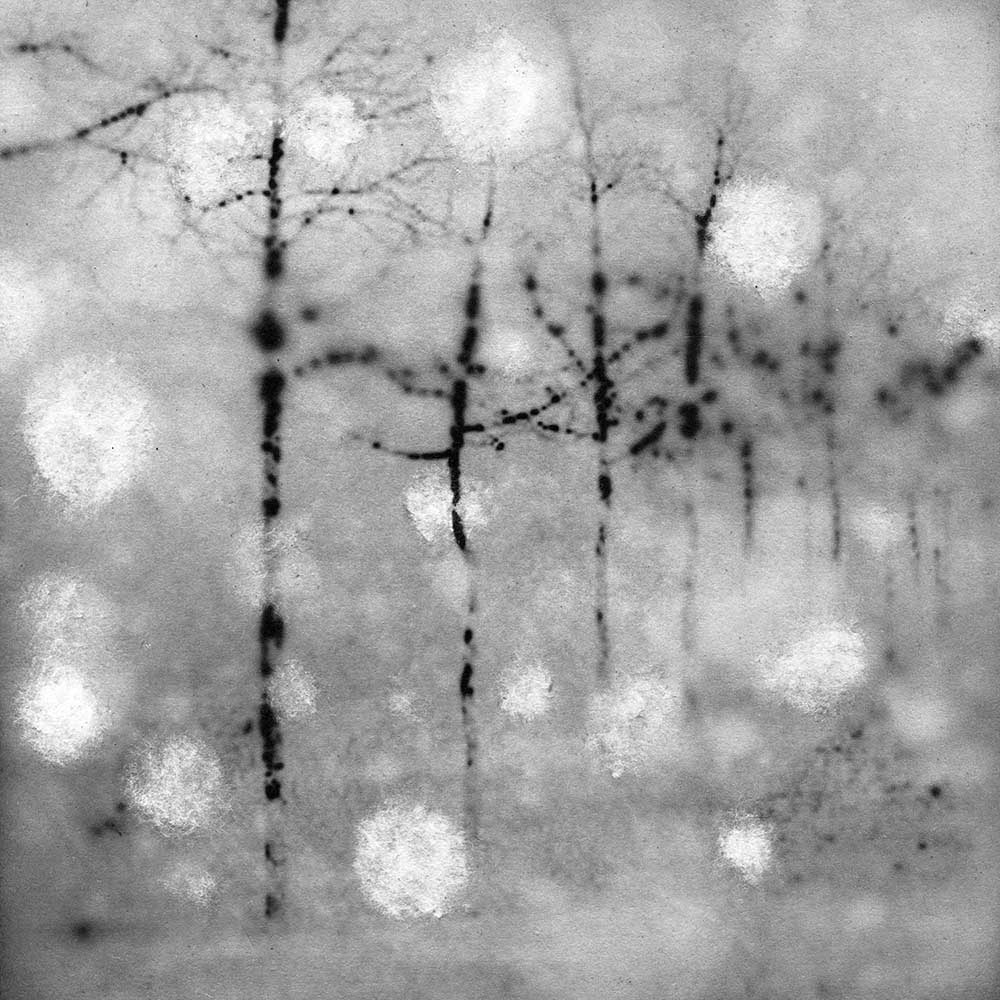 """The Prospect of Freezing, by Carla Shapiro, Sanded Platinum/Palladium Print, unique, approx 8""""x8"""", Framed - $800"""