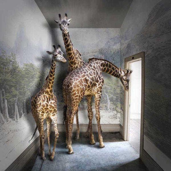 Serengeti Room by Carol Erb.