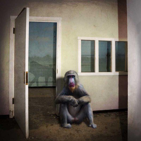 Solitary by Carol Erb