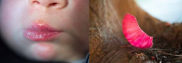 Baby Lips Shell by Michal Goldboim
