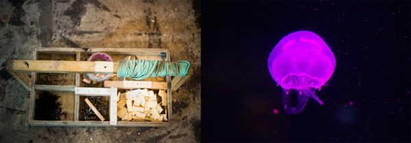 Toolbox - Purple Jellyfish by Michal Greenboim