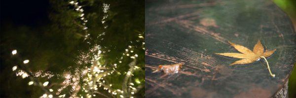 Festive Lights - Old Leaf