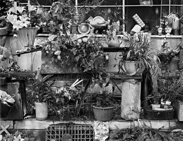 Annie Belle Sturgehill's Garden, Athens, Georgia, 1988 by Vaughn Sills