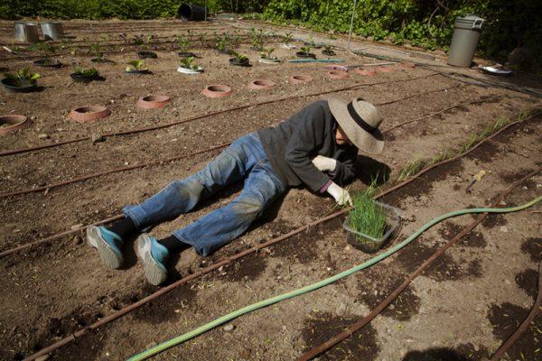 Planting Leeks by Laurie Blakeslee
