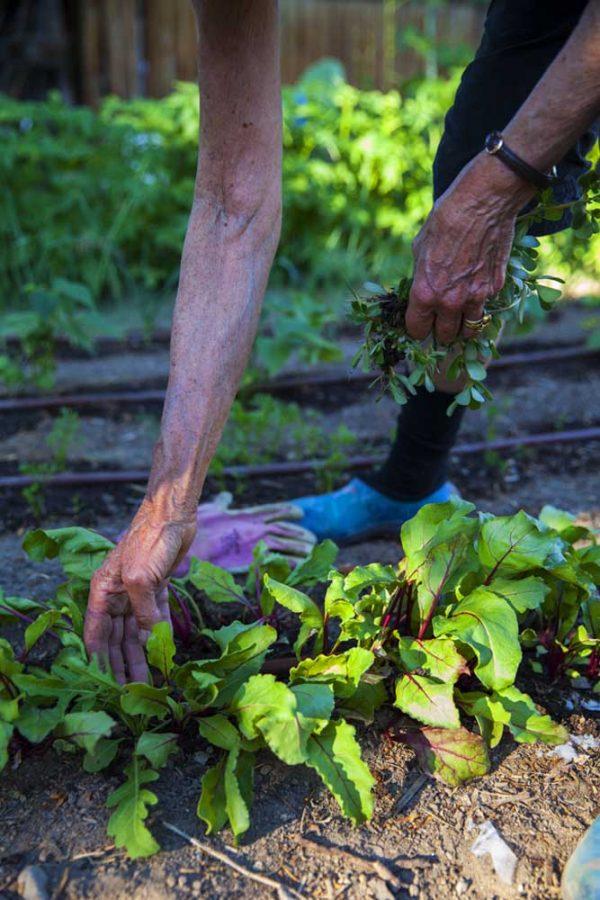 Weeding by Laurie Blakeslee
