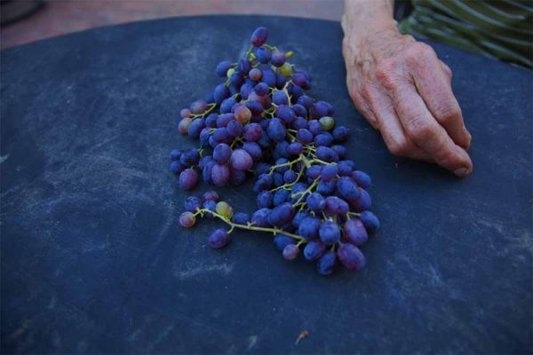 Table Grapes by Laurie Blakeslee