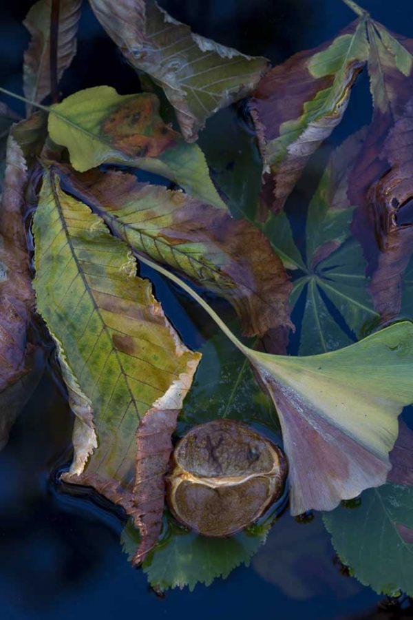 Ginko and Chestnut by Lisa Redburn